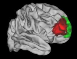 An area of the brain that seems to be unique to humans (in red). Credit: Image courtesy of University of Oxford