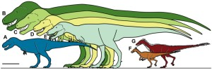 Relative size of Nanuqsaurus hoglundi. Silhouettes showing approximate sizes of representative theropods. A, Nanuqsaurus hoglundi, based on holotype, DMNH 21461. B, Tyrannosaurus rex, based on FMNH PR2081. C, Tyrannosaurus rex, based on AMNH 5027. D, Daspletosaurus torosus, based on FMNH PR308; E, Albertosaurus sarcophagus, based on TMP 81.10.1; F, Troodon formosus, lower latitude individual based on multiple sources and size estimates; G, Troodon sp., North Slope individual based on extrapolation from measurements of multiple dental specimens [47]. Scale bar equals 1 m. Credit: From: Anthony R. Fiorillo, Ronald S. Tykoski. A Diminutive New Tyrannosaur from the Top of the World. PLoS ONE, 2014; 9 (3): e91287 DOI: 10.1371/journal.pone.0091287