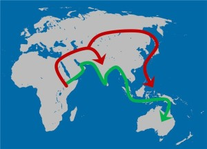 The Out-of-Africa model that best fits both the genetic and cranial shape data. A first migration along the Indian Ocean rim occurred as early as 130 thousand years ago (green arrow) and was followed by a second, more recent migration wave into Eurasia (red arrow). Credit: Katerina Harvati/University of Tübingen and Senckenberg Center for Human Evolution and Palaeoenvironment