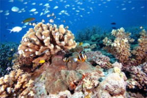 View of reef biodiversity in the Indo-Pacific. Credit: Copyright David R. Bellwood