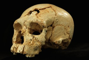 Skull 17 from the Sima de los Huesos site in Sierra de Atapuerca, Spain. Credit: Image © Javier Trueba / Madrid Scientific Films