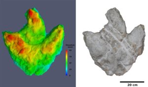 Three-dimensional model of one of the largest footprint fillings. Left: Color-coded elevation model. Reds represent the highest points in the footprint, and blues represent the lowest points. Right: Three-dimensional model with photorealistic texture. Credit: Jens Lallensack/2015
