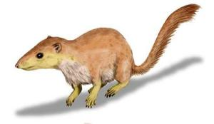 a reconstruction of early mammal Purgatorius unio.